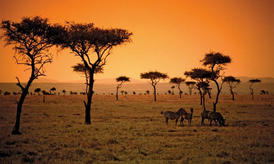 380541 Africa savana 748x494 1