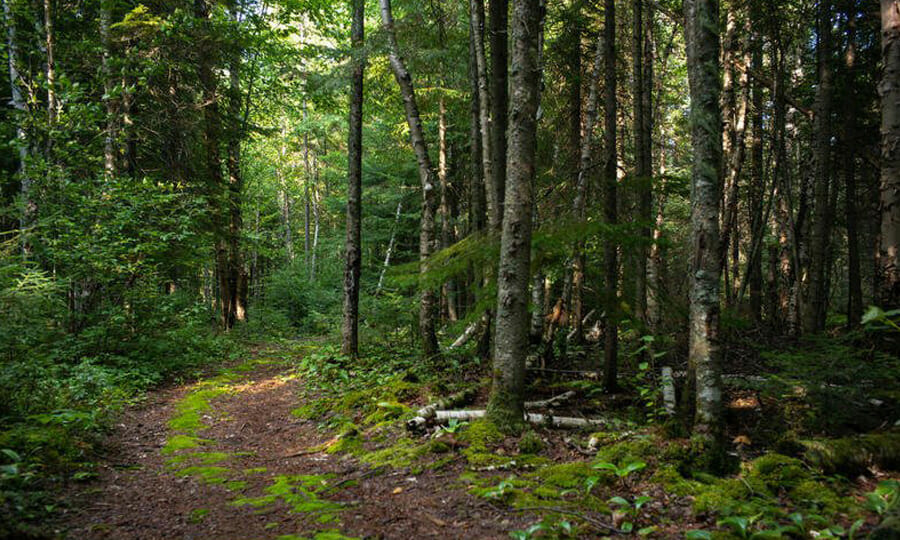 Boreal Forest Canada