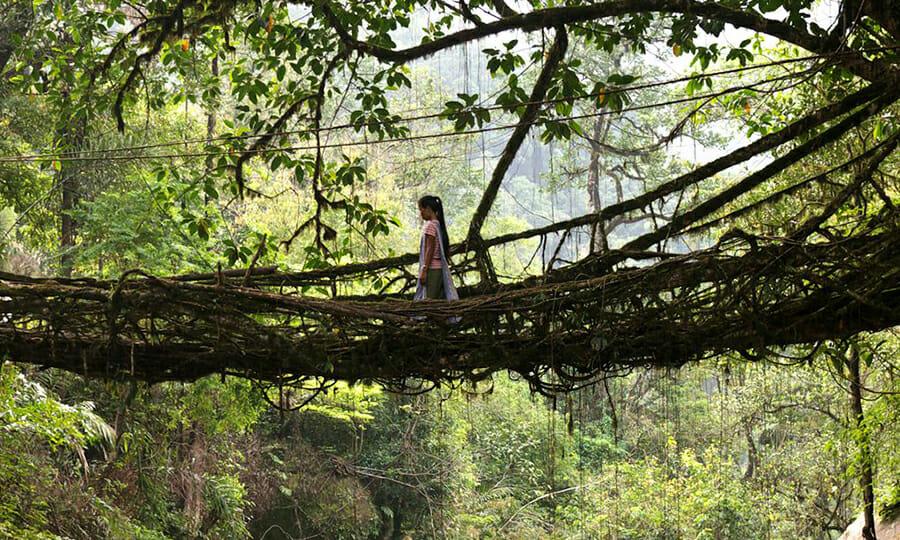 Cherrapunji Tree Bridge