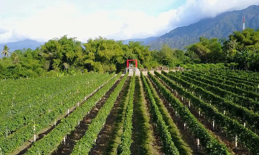 Vineyards Hattens 2 1