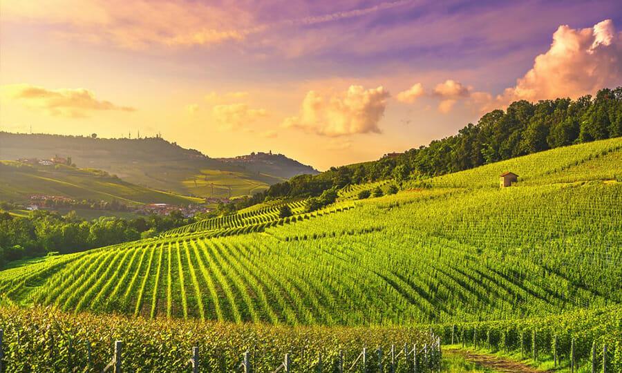 Vineyards in Piedmont Italy 1
